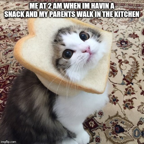 cat wit bread |  ME AT 2 AM WHEN IM HAVIN A SNACK AND MY PARENTS WALK IN THE KITCHEN | image tagged in cats,bread,cute cat,memes | made w/ Imgflip meme maker