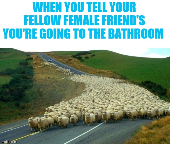 Where we go one we go all ᕙ(⇀‸↼‶)ᕗ |  WHEN YOU TELL YOUR FELLOW FEMALE FRIEND'S YOU'RE GOING TO THE BATHROOM | image tagged in sheep,i don't even know why | made w/ Imgflip meme maker