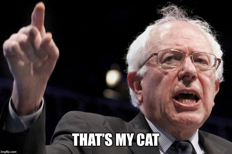 Bernie Sanders | THAT'S MY CAT | image tagged in bernie sanders | made w/ Imgflip meme maker