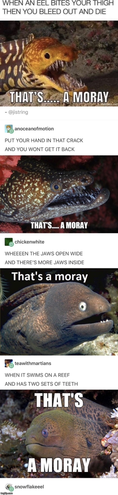 That's a moray | made w/ Imgflip meme maker