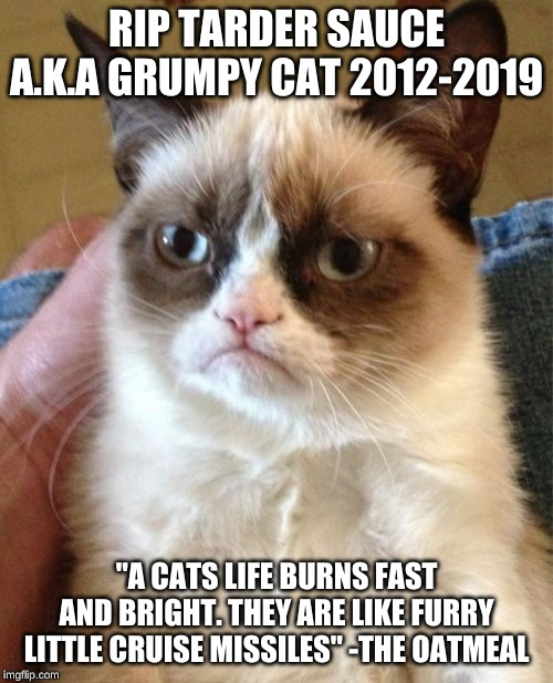 "you will always be in our hearts ;-; | RIP TARDER SAUCE A.K.A GRUMPY CAT 2012-2019 ""A CATS LIFE BURNS FAST AND BRIGHT. THEY ARE LIKE FURRY LITTLE CRUISE MISSILES"" -THE OATMEAL 