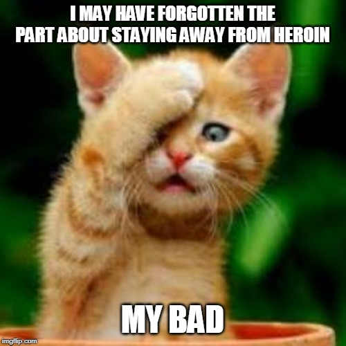 forgot cat | I MAY HAVE FORGOTTEN THE PART ABOUT STAYING AWAY FROM HEROIN MY BAD | image tagged in forgot cat | made w/ Imgflip meme maker