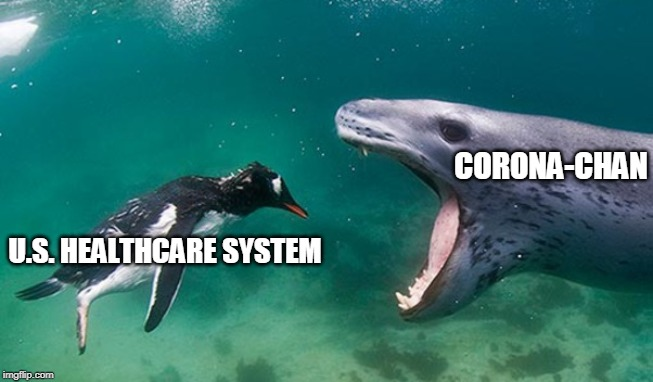 You saw this coming... |  CORONA-CHAN; U.S. HEALTHCARE SYSTEM | image tagged in penguin seal close-up,coronavirus,healthcare,cdc,pandemic,first world problems | made w/ Imgflip meme maker
