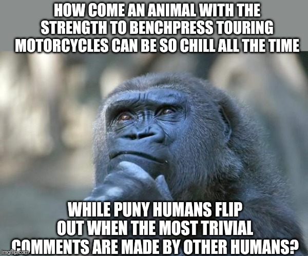 Animals might be wiser than us....a terrifying thought. |  HOW COME AN ANIMAL WITH THE STRENGTH TO BENCHPRESS TOURING MOTORCYCLES CAN BE SO CHILL ALL THE TIME; WHILE PUNY HUMANS FLIP OUT WHEN THE MOST TRIVIAL COMMENTS ARE MADE BY OTHER HUMANS? | image tagged in that is the question,words of wisdom | made w/ Imgflip meme maker