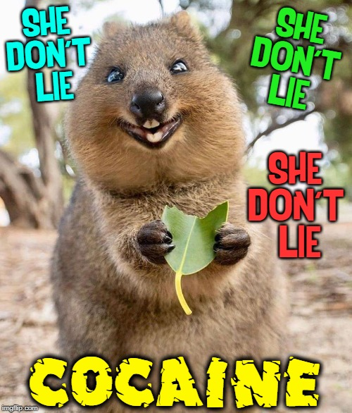 Cocaine comes from the Coca Leaf (erythroxylum coca) |  SHE DON'T  LIE; SHE DON'T  LIE; SHE DON'T  LIE; COCAINE | image tagged in vince vance,cocaine,coca,leaves,snort,eric clapton | made w/ Imgflip meme maker