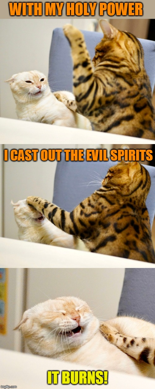 KITTY DOESNT LIKE IT |  WITH MY HOLY POWER; I CAST OUT THE EVIL SPIRITS; IT BURNS! | image tagged in memes,cats,funny cats,lolcats | made w/ Imgflip meme maker