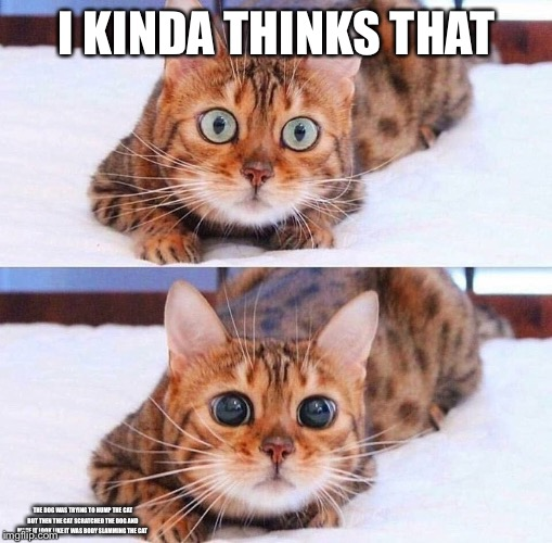 Cat Wide-Eyes | I KINDA THINKS THAT THE DOG WAS TRYING TO HUMP THE CAT BUT THEN THE CAT SCRATCHED THE DOG AND MADE IT LOOK LIKE IT WAS BODY SLAMMING THE CAT | image tagged in cat wide-eyes | made w/ Imgflip meme maker