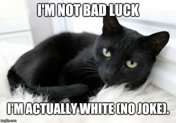black cat |  I'M NOT BAD LUCK; I'M ACTUALLY WHITE (NO JOKE). | image tagged in black cat | made w/ Imgflip meme maker