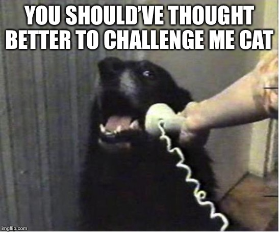 Yes this is dog | YOU SHOULD'VE THOUGHT BETTER TO CHALLENGE ME CAT | image tagged in yes this is dog | made w/ Imgflip meme maker