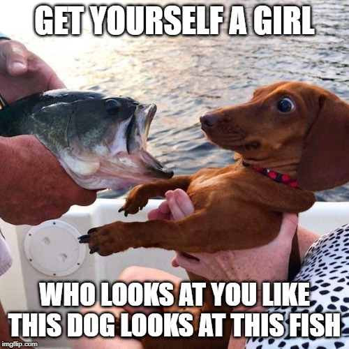 Be My Girl |  GET YOURSELF A GIRL; WHO LOOKS AT YOU LIKE THIS DOG LOOKS AT THIS FISH | image tagged in funny dog | made w/ Imgflip meme maker
