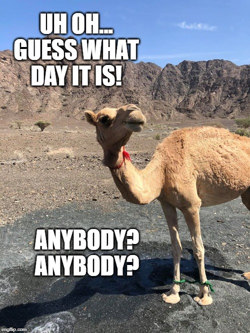 Hump Day |  UH OH... GUESS WHAT DAY IT IS! ANYBODY? ANYBODY? | image tagged in hump day | made w/ Imgflip meme maker