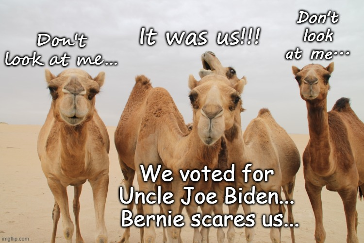 Scared... |  Don't look at me... It was us!!! Don't look at me... We voted for Uncle Joe Biden...  Bernie scares us... | image tagged in biden,bernie,scared,dims | made w/ Imgflip meme maker