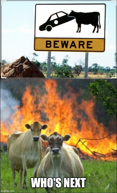 WHO'S NEXT | image tagged in memes,evil cows,funny signs,cow,this is a tag,thisimagehasalotoftags | made w/ Imgflip meme maker