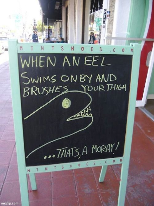 That's a Moray | image tagged in eels,moray,why am i doing this,stop reading the tags | made w/ Imgflip meme maker