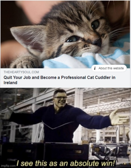 Cat Cuddling | image tagged in i see this as an absolute win,cats,cuddle,cuddling,ireland,jobs | made w/ Imgflip meme maker