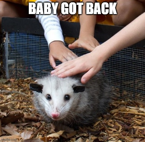 Baby Got Back |  BABY GOT BACK | image tagged in possum,petting,happy | made w/ Imgflip meme maker