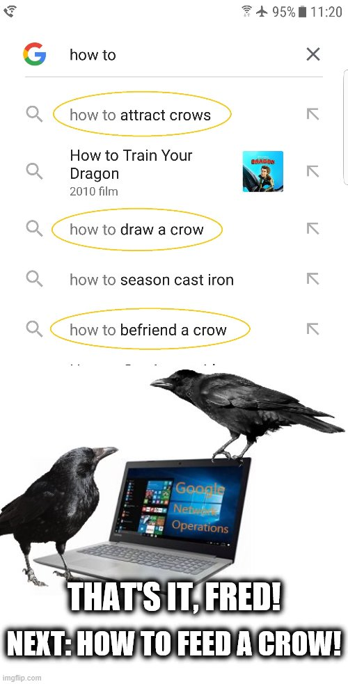 What da...? | THAT'S IT, FRED! NEXT: HOW TO FEED A CROW! | image tagged in memes,crows,google,how to | made w/ Imgflip meme maker