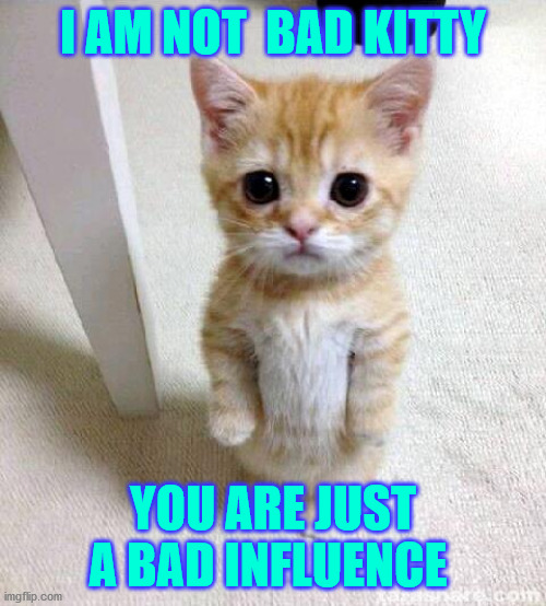 kitty |  I AM NOT  BAD KITTY; YOU ARE JUST A BAD INFLUENCE | image tagged in memes,cute cat | made w/ Imgflip meme maker