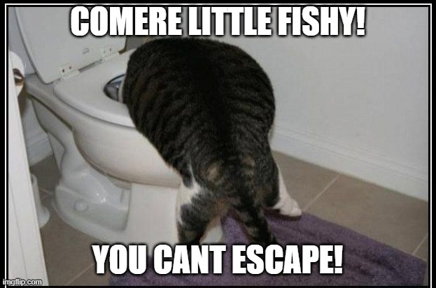 COMERE LITTLE FISHY! YOU CANT ESCAPE! | image tagged in cat,funny | made w/ Imgflip meme maker