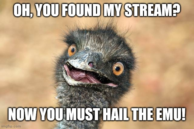 surprised emu |  OH, YOU FOUND MY STREAM? NOW YOU MUST HAIL THE EMU! | image tagged in surprised emu | made w/ Imgflip meme maker