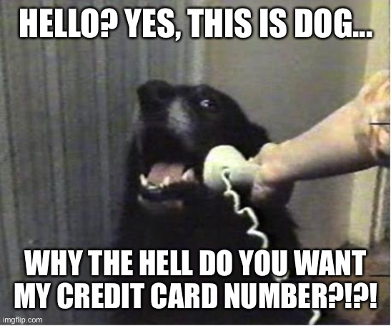 Yes this is dog |  HELLO? YES, THIS IS DOG... WHY THE HELL DO YOU WANT MY CREDIT CARD NUMBER?!?! | image tagged in yes this is dog | made w/ Imgflip meme maker