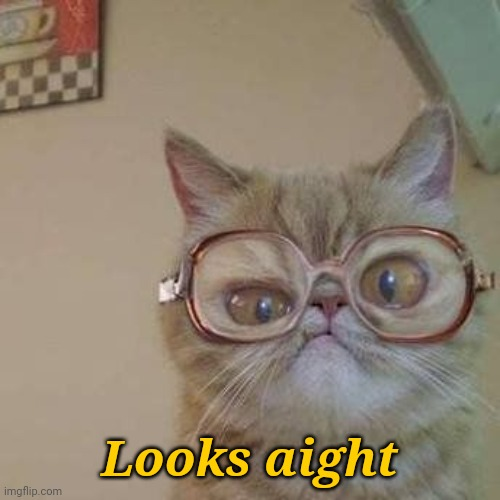 Funny Cat with Glasses | Looks aight | image tagged in funny cat with glasses | made w/ Imgflip meme maker