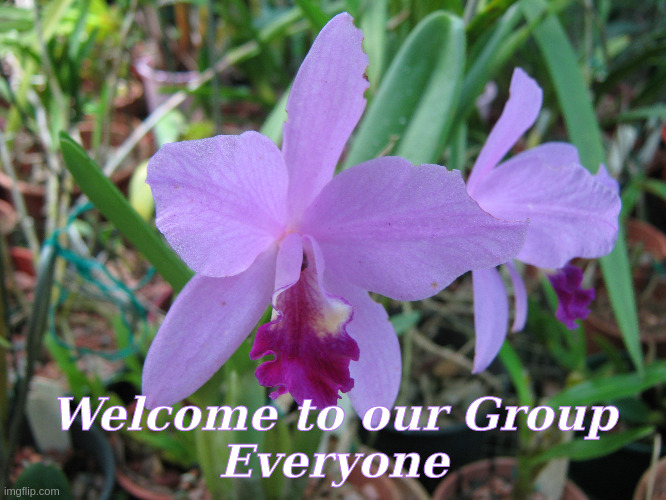 Welcome to our Group |  Welcome to our Group Everyone | image tagged in welcome,orchids,flowers | made w/ Imgflip meme maker