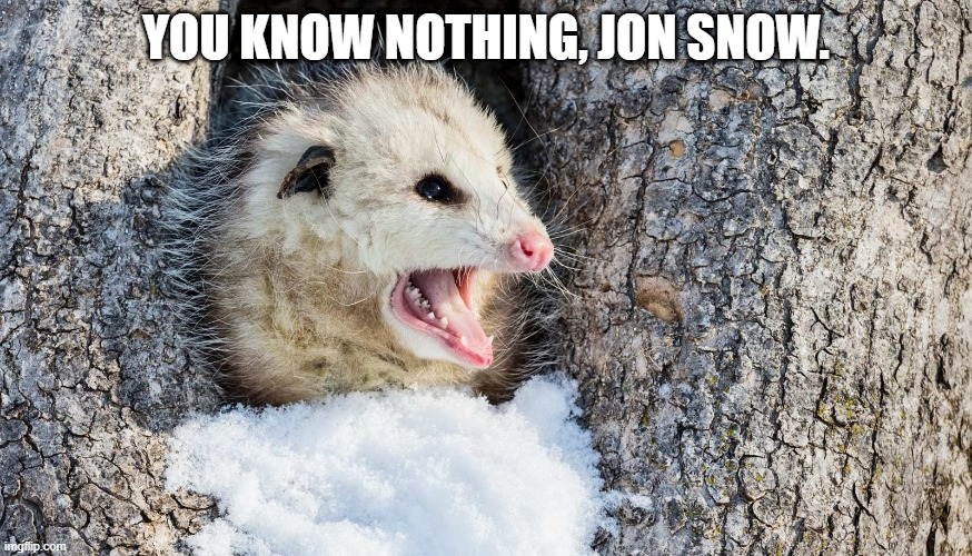 you know nothing jon snow |  YOU KNOW NOTHING, JON SNOW. | image tagged in jon snow,got,opossum | made w/ Imgflip meme maker