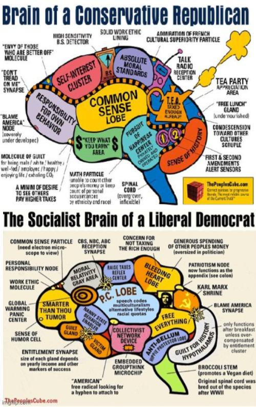 politics liberal brain Memes & GIFs - Imgflip