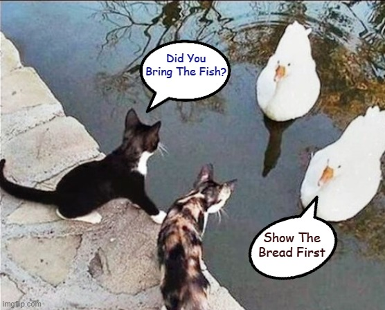Conversations Between Animals |  Did You Bring The Fish? Show The Bread First | image tagged in memes,cats,ducks,animals | made w/ Imgflip meme maker