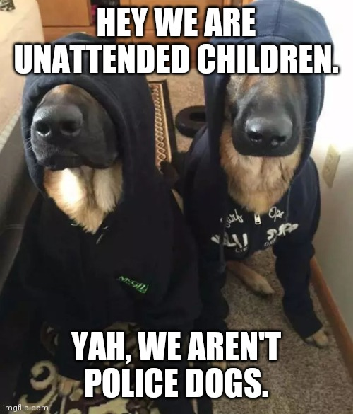 k9 undercover | HEY WE ARE UNATTENDED CHILDREN. YAH, WE AREN'T POLICE DOGS. | image tagged in k9 undercover | made w/ Imgflip meme maker