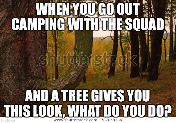 WHEN YOU GO OUT CAMPING WITH THE SQUAD; AND A TREE GIVES YOU THIS LOOK, WHAT DO YOU DO? | made w/ Imgflip meme maker