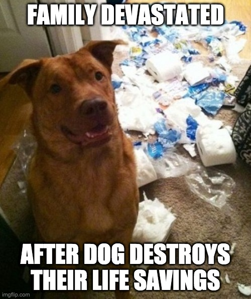 FAMILY DEVASTATED; AFTER DOG DESTROYS THEIR LIFE SAVINGS | image tagged in dog,coronavirus,no more toilet paper | made w/ Imgflip meme maker