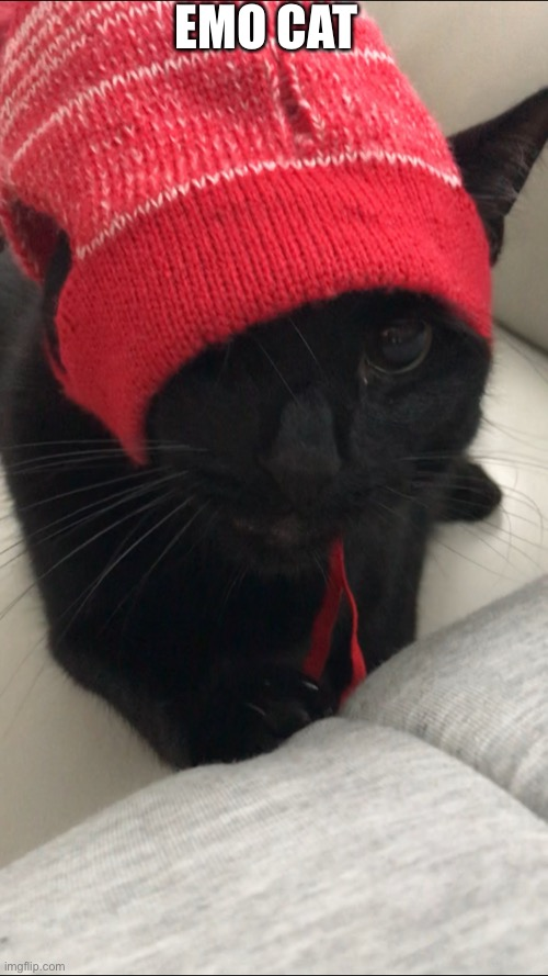 EMO CAT | image tagged in cat,cats,emo | made w/ Imgflip meme maker