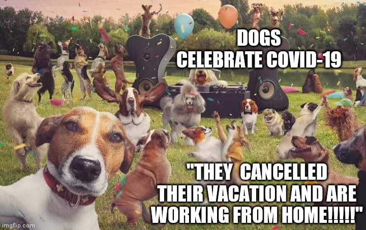 Dogs celebrate Memes - Imgflip