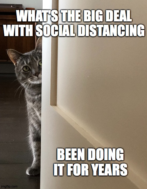 Cats be social distancing |  WHAT'S THE BIG DEAL WITH SOCIAL DISTANCING; BEEN DOING IT FOR YEARS | image tagged in cats,funny cats,funny cat memes,cat memes,coronavirus,covid-19 | made w/ Imgflip meme maker