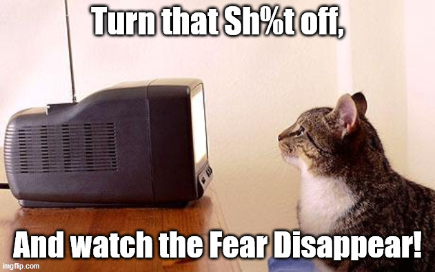 Turn that Sh%t off, And watch the Fear Disappear! | image tagged in cat watching tv | made w/ Imgflip meme maker