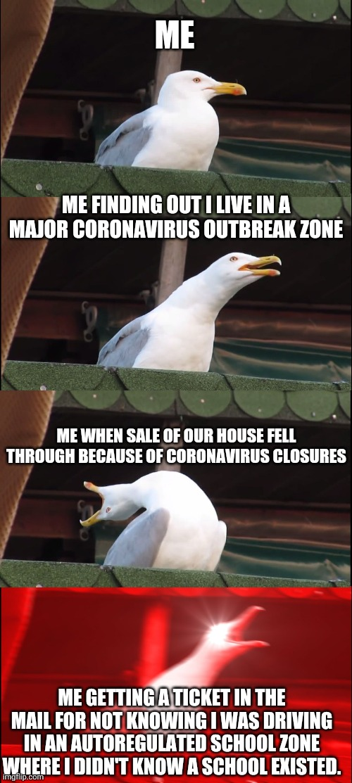 How was your day? |  ME; ME FINDING OUT I LIVE IN A MAJOR CORONAVIRUS OUTBREAK ZONE; ME WHEN SALE OF OUR HOUSE FELL THROUGH BECAUSE OF CORONAVIRUS CLOSURES; ME GETTING A TICKET IN THE MAIL FOR NOT KNOWING I WAS DRIVING IN AN AUTOREGULATED SCHOOL ZONE WHERE I DIDN'T KNOW A SCHOOL EXISTED. | image tagged in memes,inhaling seagull | made w/ Imgflip meme maker