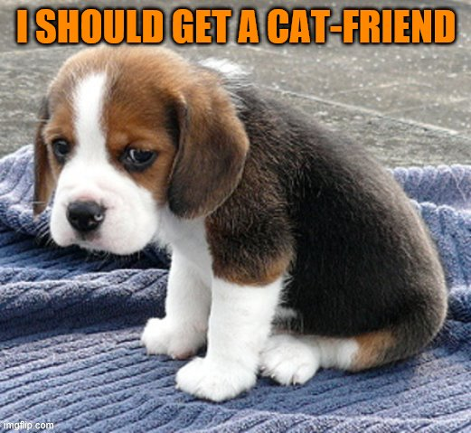 LOUD_VOICE | I SHOULD GET A CAT-FRIEND | image tagged in loud_voice | made w/ Imgflip meme maker