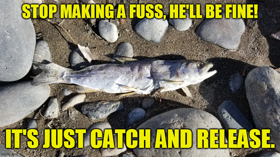 One of the biggest myths of fishing.  A third to half of them don't survive, depending on the species. | STOP MAKING A FUSS, HE'LL BE FINE! IT'S JUST CATCH AND RELEASE. | image tagged in catch and release,fishing,vegetarian,vegan,sport,fly and bait | made w/ Imgflip meme maker