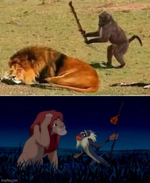 image tagged in rafiki,monkey lion | made w/ Imgflip meme maker
