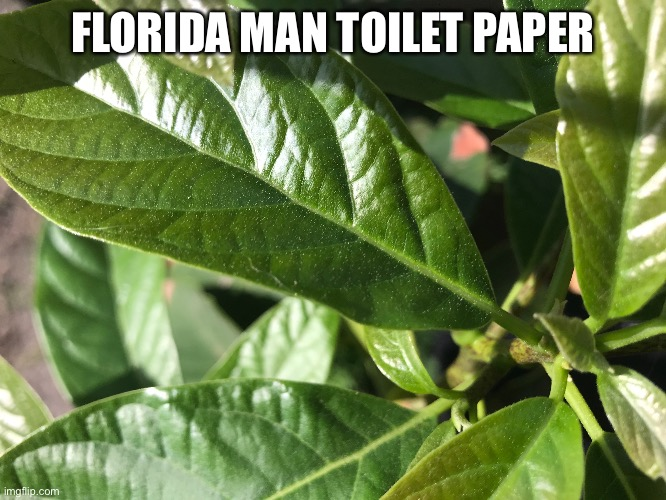 FLORIDA MAN TOILET PAPER | image tagged in florida man,coronavirus,tp | made w/ Imgflip meme maker