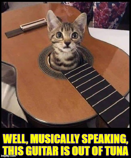 My Opinion: This Guitar Works Better without the Strings |  WELL, MUSICALLY SPEAKING, THIS GUITAR IS OUT OF TUNA | image tagged in vince vance,cats,guitars,tuna,cat in a box,kittens | made w/ Imgflip meme maker