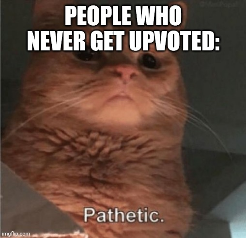 Pathetic Cat | PEOPLE WHO NEVER GET UPVOTED: | image tagged in pathetic cat | made w/ Imgflip meme maker