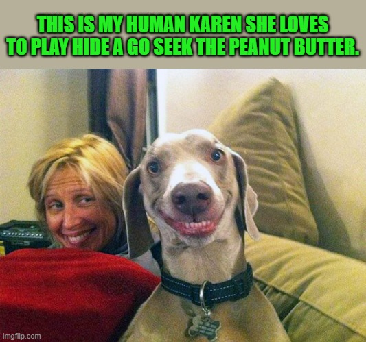hide and go seek | THIS IS MY HUMAN KAREN SHE LOVES TO PLAY HIDE A GO SEEK THE PEANUT BUTTER. | image tagged in karen,dog | made w/ Imgflip meme maker
