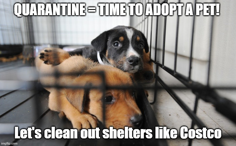 Quarantine dogs | QUARANTINE = TIME TO ADOPT A PET! Let's clean out shelters like Costco | image tagged in quarantine dogs | made w/ Imgflip meme maker