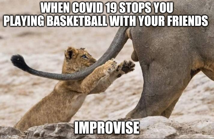 Ballplay | WHEN COVID 19 STOPS YOU PLAYING BASKETBALL WITH YOUR FRIENDS IMPROVISE | image tagged in funny ball play,funny basketball | made w/ Imgflip meme maker