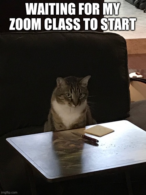 WAITING FOR MY ZOOM CLASS TO START | image tagged in post-it note cat,memes | made w/ Imgflip meme maker