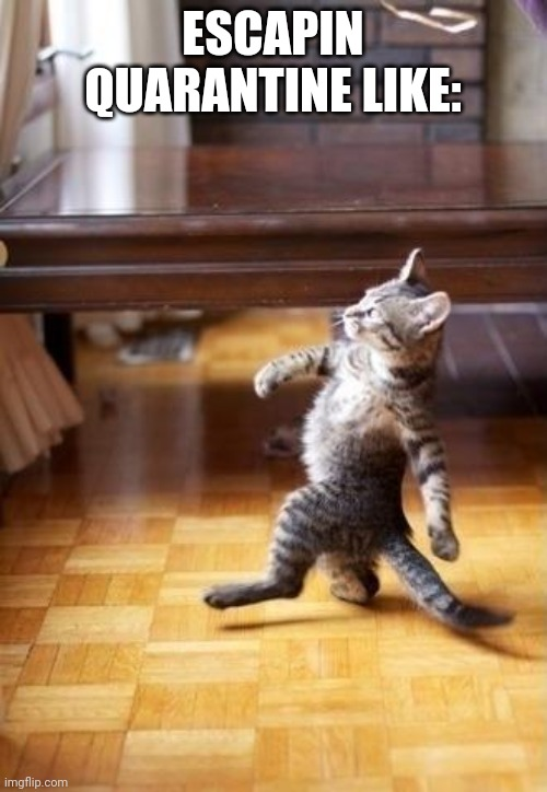 Cool Cat Stroll |  ESCAPIN QUARANTINE LIKE: | image tagged in memes,cool cat stroll | made w/ Imgflip meme maker