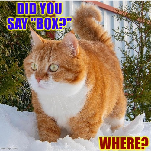 "My Cat is a Hunter... for Boxes |  DID YOU SAY ""BOX?""; WHERE? 